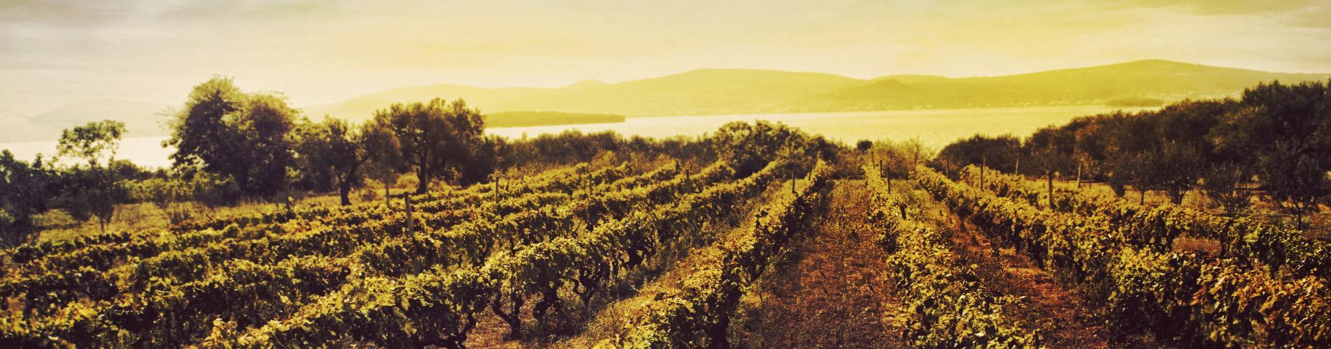 Tu tienda de vino online y enoturismo